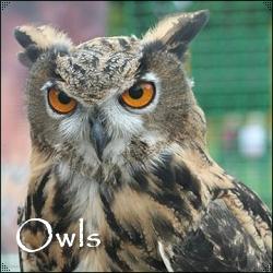 Owls Mythology And Folklore The White Goddess