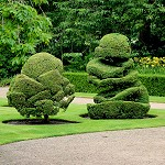 Rufford Old Hall: Topiary