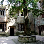 Yew Tree in Conduit Court at Skipton Castle