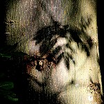100 Days of Nature: Day 36: 28th August 2014: Light and shadows on a tree trunk (Priestly Clough, Accrington)