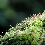 Day 65: 26th September 2014 Common Moss (Priestly Clough, Accrington)