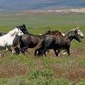 Horse/Pony